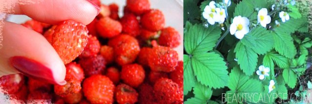 wild-strawberries