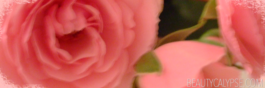 roses-bloom-close-up-blurred