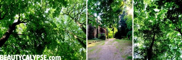 forest-around-EisenhardtCastle