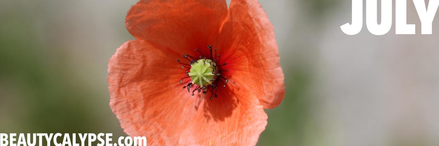 just_a_flower