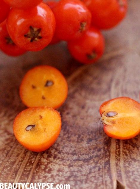 rowan-berry-cut-in-halves-closeup3