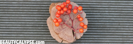 rowan-berry-season