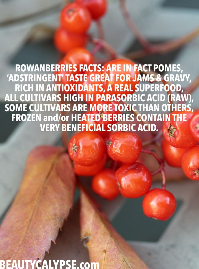 rowanberries-health-benefits-sorbic-acid