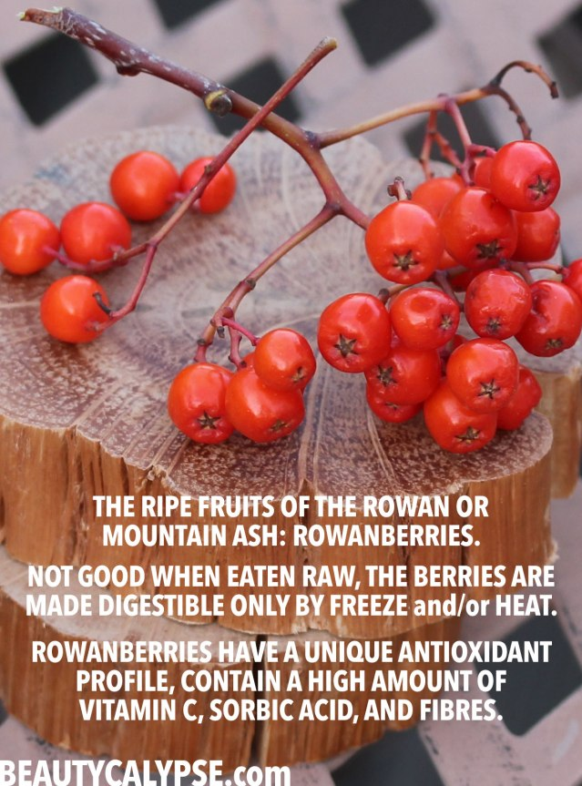 rowanberries-health-benefits