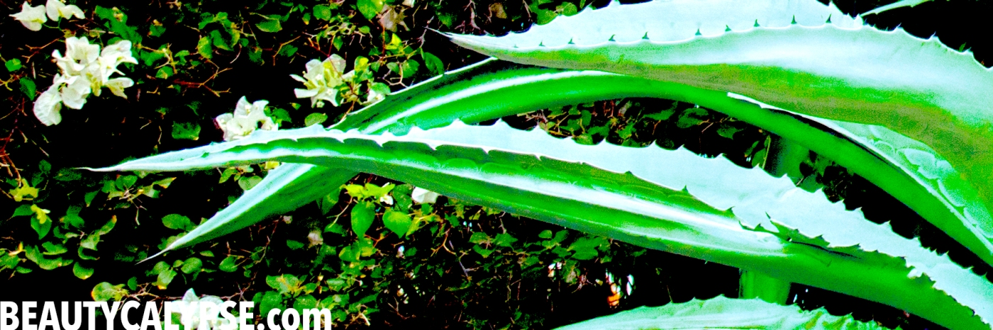 aloe-leaves