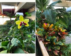 Biosphäre Potsdam impressions: orchid garden, tropical garden