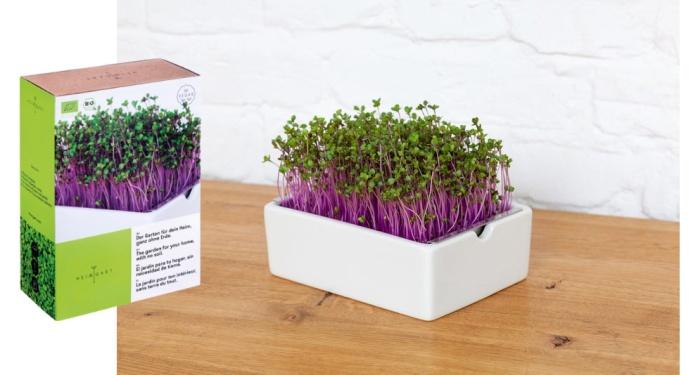 Heimgart microgreens starter kit: here red cabbage seeds and microgreens